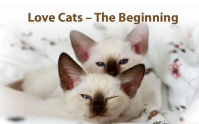 Love Cats – The Beginning