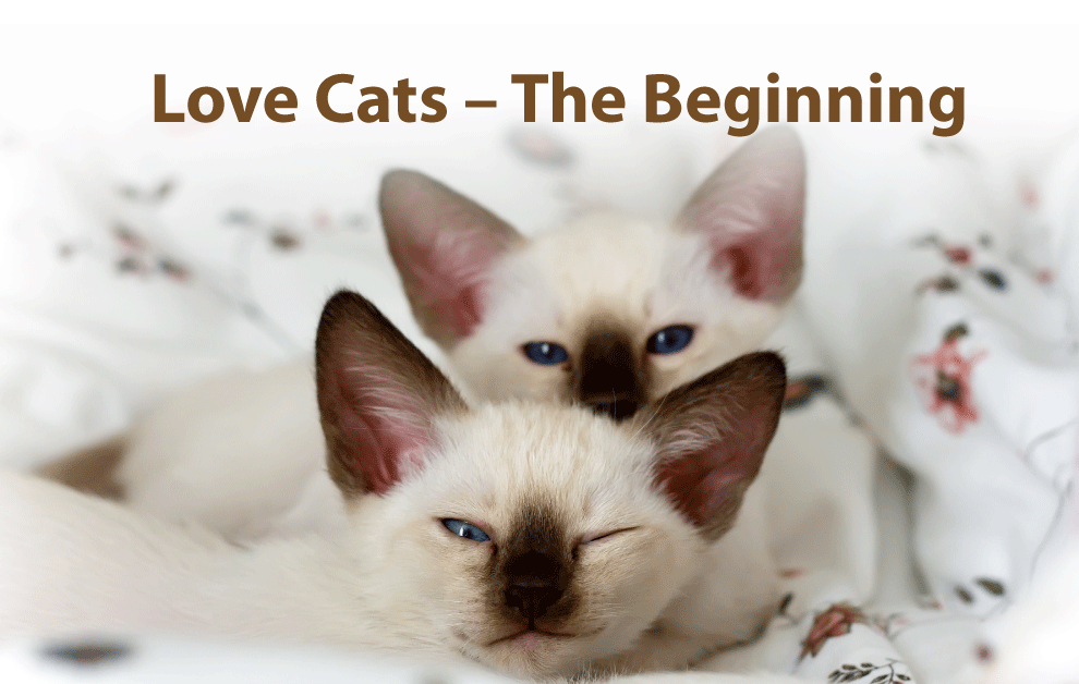 Love Cats – The Beginning