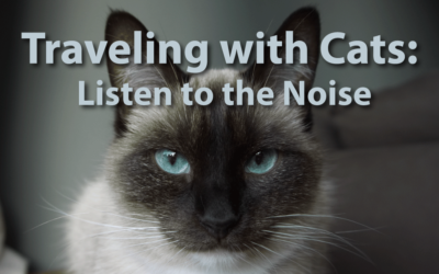 Traveling with Cats: Listen to the Noise